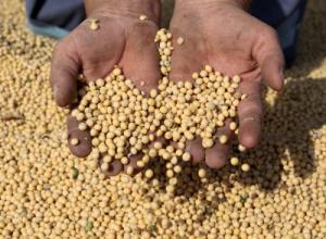 Beware of Soybeans on Ingredient Panel