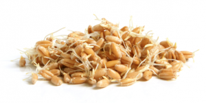 Sprouted Grain Bread, Bagels, Pasta & More!